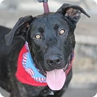 Adopt A Pet :: Gavin - Canoga Park, CA