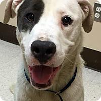 Adopt A Pet :: BONES (video) - Los Angeles, CA