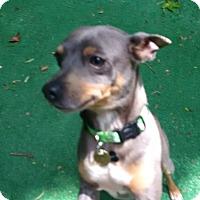 Adopt A Pet :: Goliath - Charlotte, NC