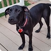 Adopt A Pet :: Lily - Broomfield, CO