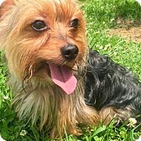 Adopt A Pet :: Finnegan & Flynn