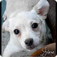 Adopt A Pet :: Jolene - Simi Valley, CA