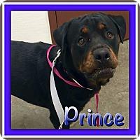 Adopt A Pet :: Prince - Gilbert, AZ