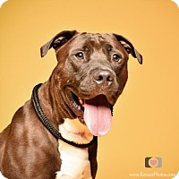 Adopt A Pet :: Zeus - Blacklick, OH