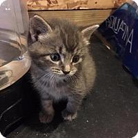 Adopt A Pet :: Sammy - Brainardsville, NY