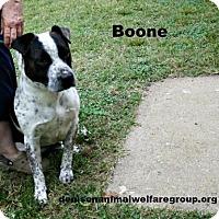 Adopt A Pet :: Boone - Denison, TX