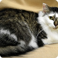 Adopt A Pet :: Ruth - Richmond, VA