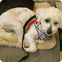 Adopt A Pet :: LOUIE - Auburn, CA