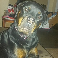 Adopt A Pet :: Izzie/Referral - Laurel, MT
