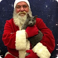 Adopt A Pet :: Dusty - Manhattan, KS