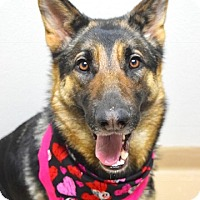 Adopt A Pet :: Reagan - Dublin, CA