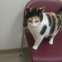 Adopt A Pet :: Sophia - Muscatine, IA