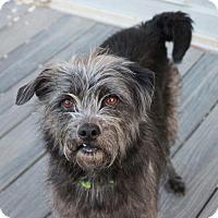 Adopt A Pet :: Meg - Atlanta, GA
