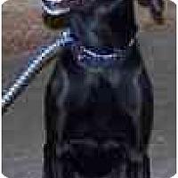 Adopt A Pet :: Danzig - Eustis, FL