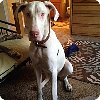 Adopt A Pet :: Nina - Mesa, AZ