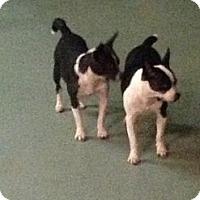 Adopt A Pet :: Dudley - Brooksville, FL