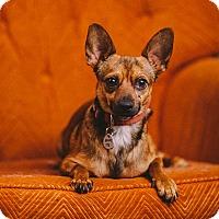 Adopt A Pet :: Valentino - Portland, OR