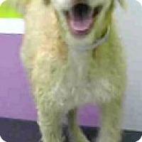 Adopt A Pet :: Yoda-ADOPTION PENDING - Boulder, CO