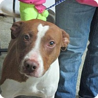 Adopt A Pet :: Kiki - Midway, KY