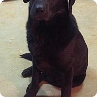 Adopt A Pet :: Cooper - Westport, CT