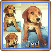 Adopt A Pet :: Jed meet me 4/15 - Manchester, CT