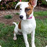 Adopt A Pet :: Diller - San Diego, CA