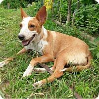 Adopt A Pet :: Sonnet - Austin, TX