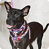 Labrador Retriever Mix Dog for adoption in Surrey, British Columbia - Diana