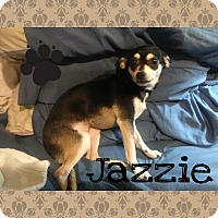 Chihuahua Mix Dog for adoption in Walker, Louisiana - Jazzie