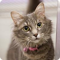 Adopt A Pet :: Polka Dots - Grayslake, IL