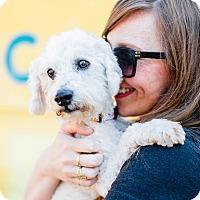 Adopt A Pet :: Pistol Pete *I'm a tripod! - Los Angeles, CA