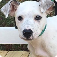Adopt A Pet :: Dill - CUMMING, GA