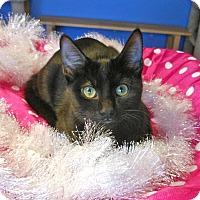 Adopt A Pet :: Candy O'Cane - Glendale, AZ