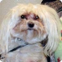 Adopt A Pet :: Buddy - Wildomar, CA