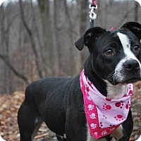 Adopt A Pet :: Zelda - New Castle, PA