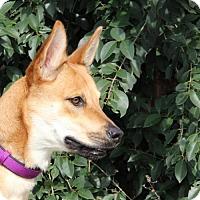 Adopt A Pet :: Kate - Helotes, TX