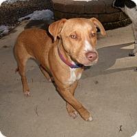 Adopt A Pet :: DeXter - LAKEVILLE, MA