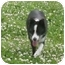 Photo 4 - Border Collie Dog for adoption in Tiffin, Ohio - Jones--ADOPTED!!!