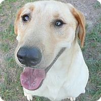 Adopt A Pet :: Jude - Katy, TX
