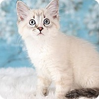 Adopt A Pet :: Eddie - Eagan, MN