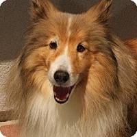 Adopt A Pet :: Patrick - La Habra, CA