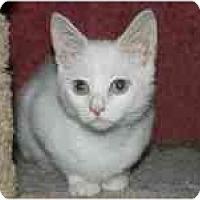 Adopt A Pet :: Elton & Elise - Arlington, VA
