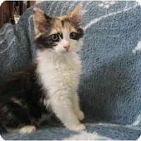 Adopt A Pet :: JuJuBee - Irvine, CA