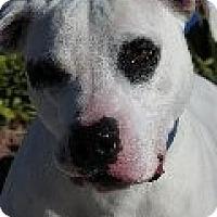 Adopt A Pet :: Brooklyn - Las Vegas, NV