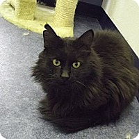 Adopt A Pet :: Mr Beasley - Colorado Springs, CO