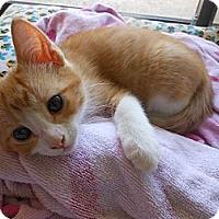 Adopt A Pet :: Liono - Irvine, CA