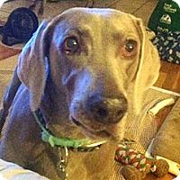 Adopt A Pet :: Kyara