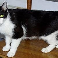 Adopt A Pet :: Moo Mom - Mt. Vernon, NY