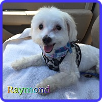 Adopt A Pet :: Raymond - Hollywood, FL