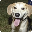 Adopt A Pet :: Andy  (Has application)